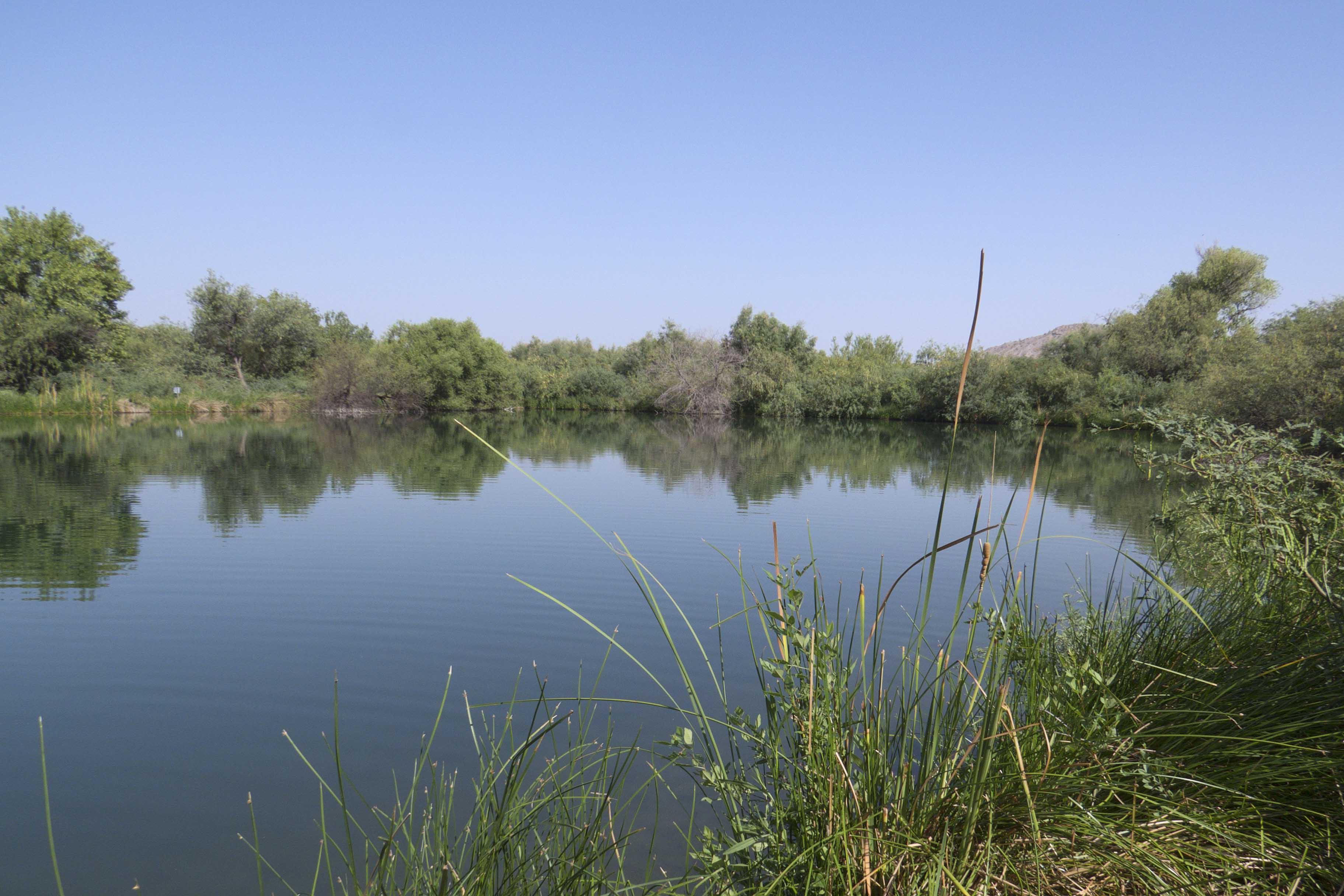 Mammoth Pond Arizona Dragonflies