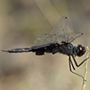 : Black Saddlebags