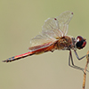 : Striped Saddlebags