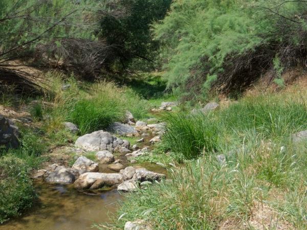 Agua Fria River - Humboldt