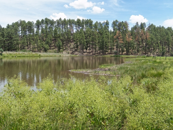 Black River Pond, marsh, and stream