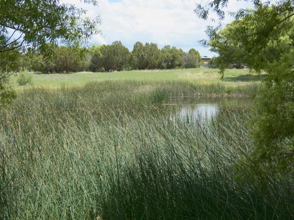 Concho Country Club Pond