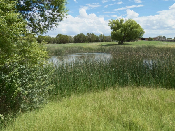 Concho Country Club Pond