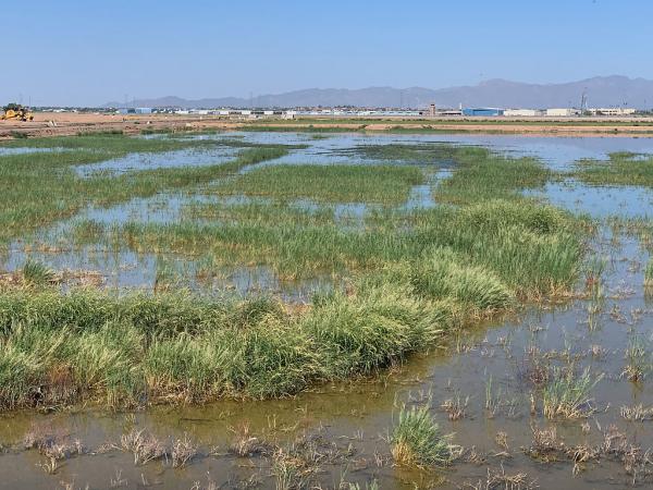 Glendale Recharge Ponds