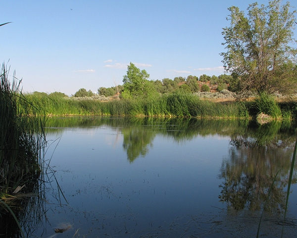 Kaibab fish pond