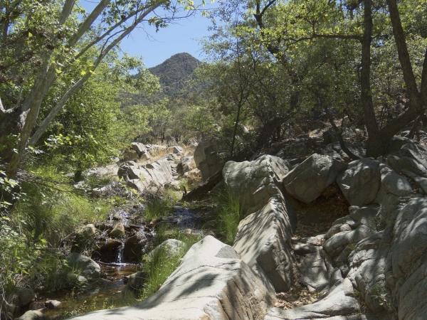 Madera Canyon