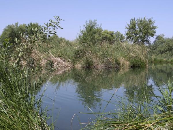 Mammoth Pond