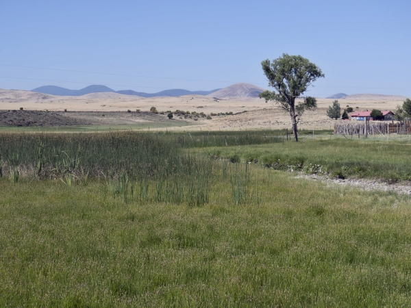Marsh along CR4366 North of Springerville