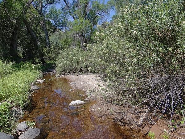 Muleshoe Ranch: Bass Canyon