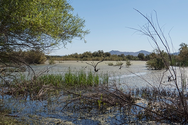 Picacho Reservoir