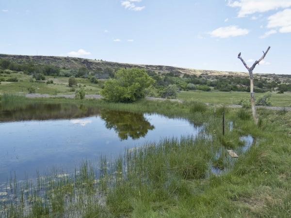 Pond along CR4008 North of Springerville