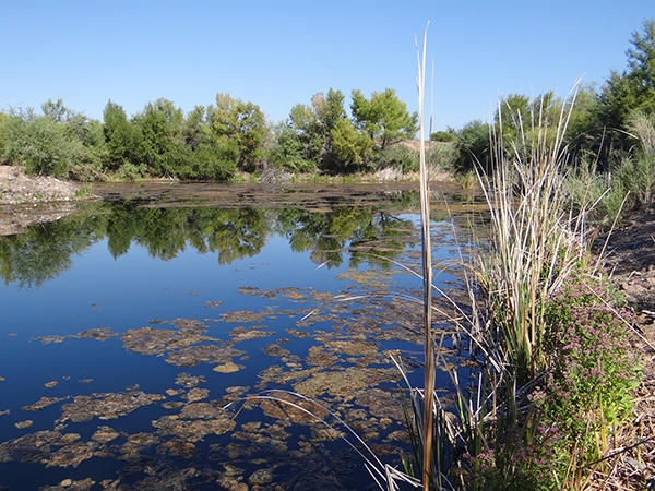 Pond along Verde River East of Fountain Hills