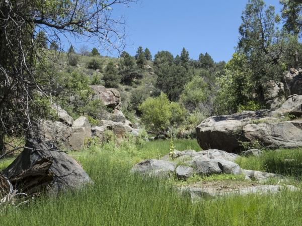 Q Ranch Area