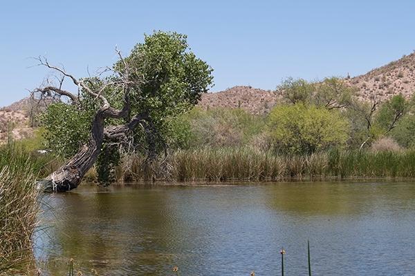 Quitobaquito Pond
