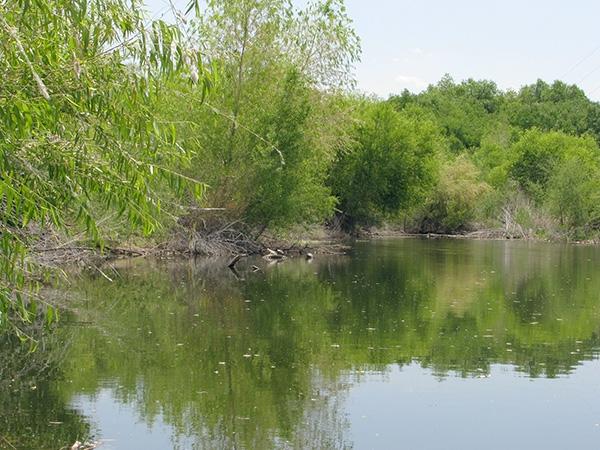 Rio Salado Habitat Restoration Area