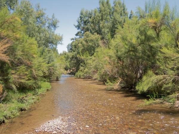 Santa Cruz River, Marana