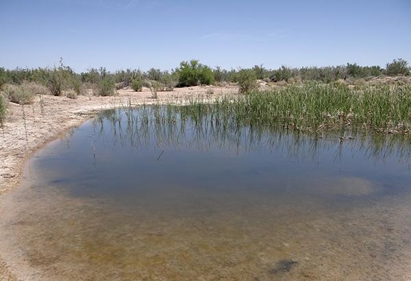 Sisson Road Pond