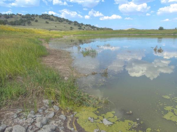 Springerville AZ Game and Fish Ponds