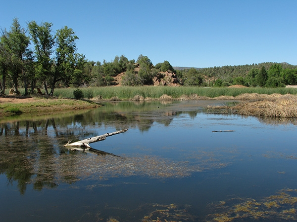 Star Valley pond