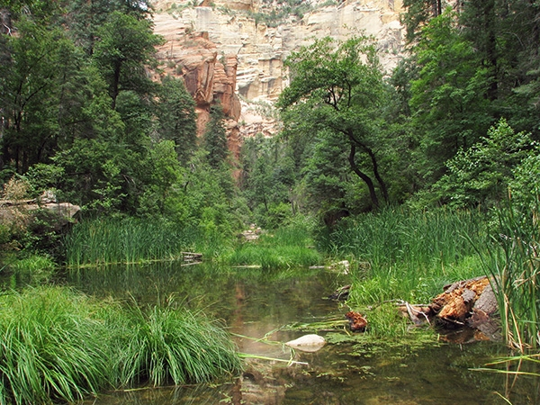 West Fork of Oak Creek Canyon