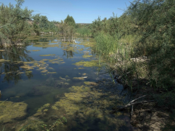 Wickenburg Secret Ponds