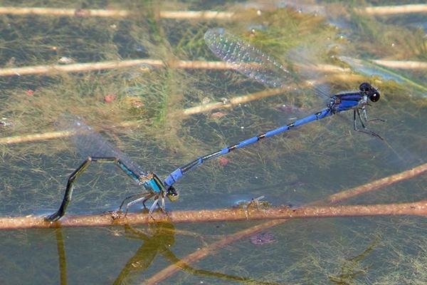Springwater Dancer