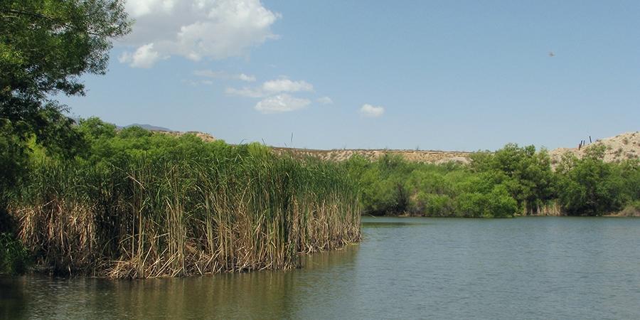 Locations Arizona Dragonflies