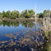 Location: Pond along Verde River East of Fountain Hills