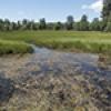 Location: Marsh near Willow Springs Lake