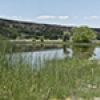 Location: Pond along CR4008 North of Springerville