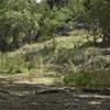 Location: Cienega Creek Natural Preserve