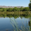 Location: Lower San Pedro River: Nature Conservancy Preserve ponds, Dudleyville