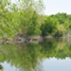 Location: Rio Salado Habitat Restoration Area
